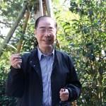 會長楊孫西在古茶樹上摘下一片茶葉