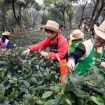 中國茶葉博物館 中茶博 杭州公交集團