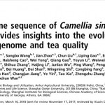 美國國家科學院院刊 PNAS Draft genome sequence of Camellia sinensis var. sinensis provides insights into the evolution of the tea genome and tea quality 研究 論文