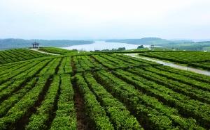 貴陽清鎮市中華茶博園