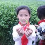 孩子們感受茶文化氛圍